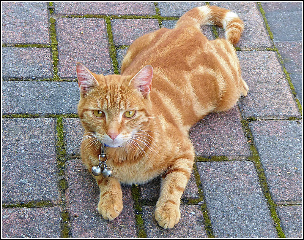 Streetwise Ginger Cat ..