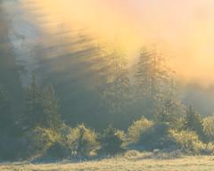 Frost wonderland