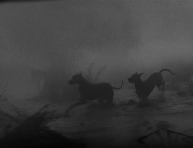 Black Dogs in Ghost Lore