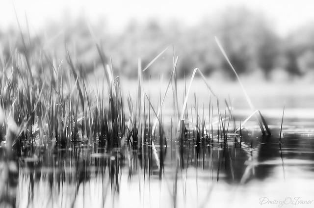 Nameless river morning