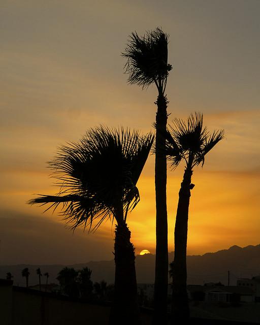 LHC Palm Tree sunset