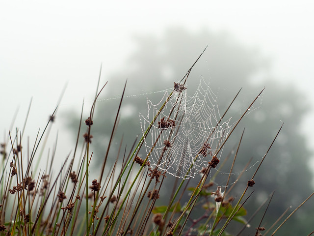 Cobweb in the mist