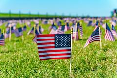 2020.09.23 Covid Memorial Project, Washington, DC USA 267 17025