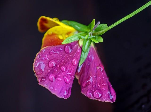 Flowerainbow