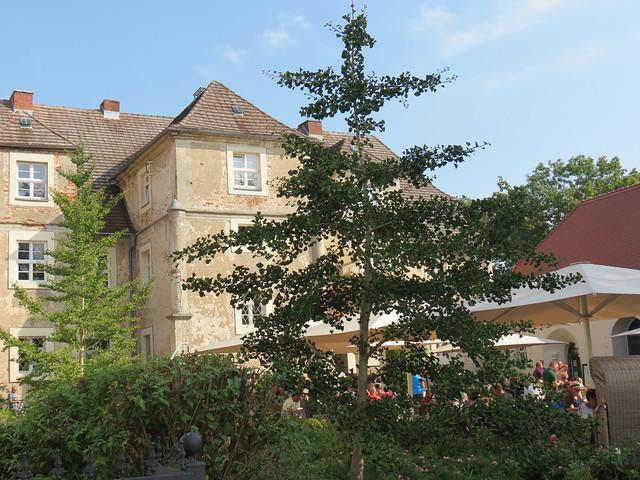 Ginkgos Schloss Mellenthin