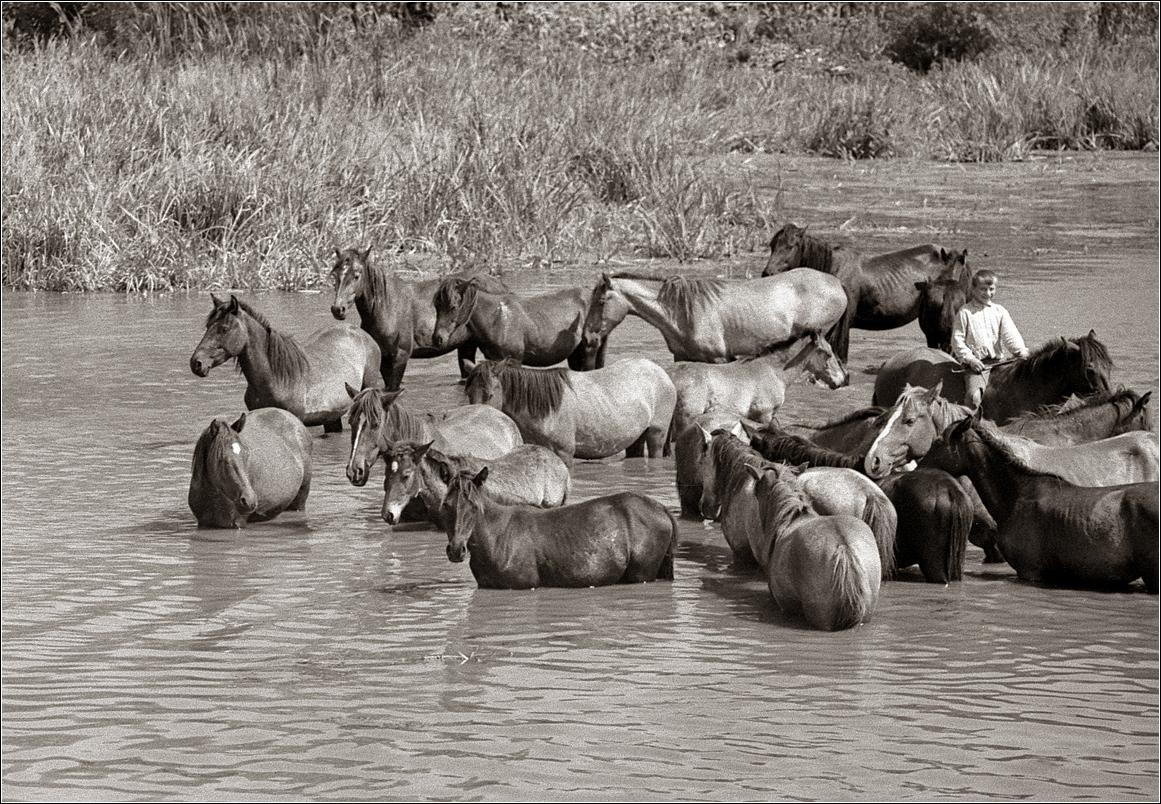 1967. Купание лошадей