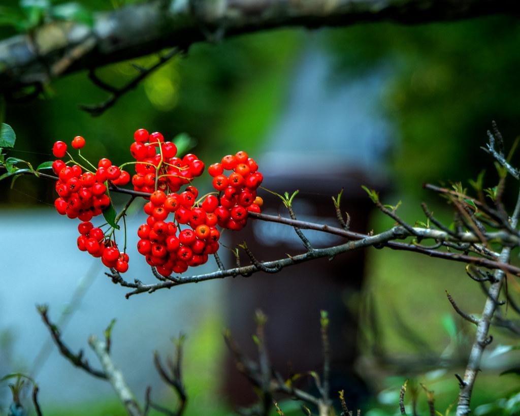 DILO Sept 22 2020 Autumnal Equinox (18)