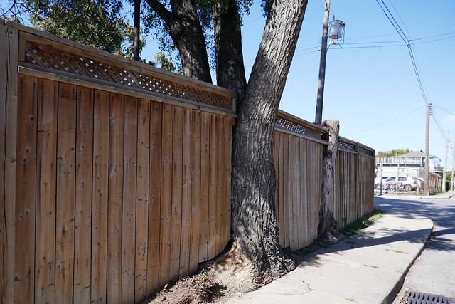 Fence fitted around trees Emerald St. N.
