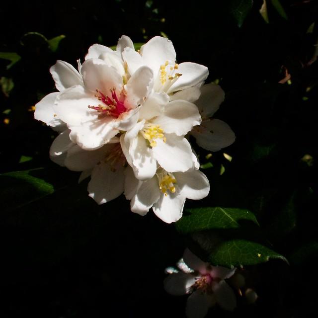 Tiny Bouquet of Softness