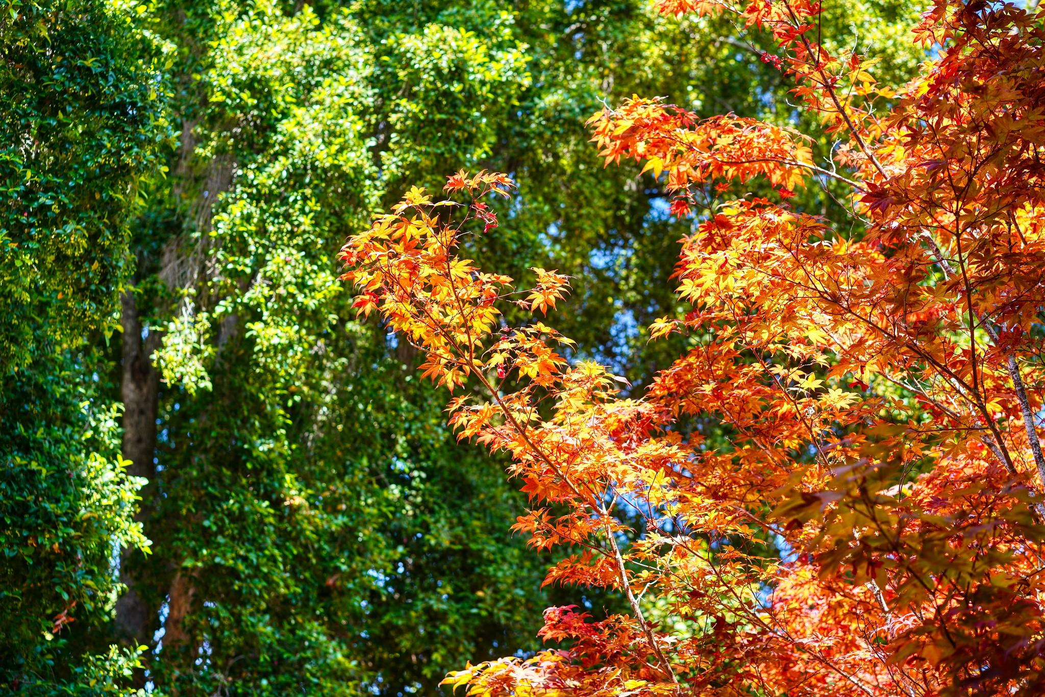 Maple Tree Contrast