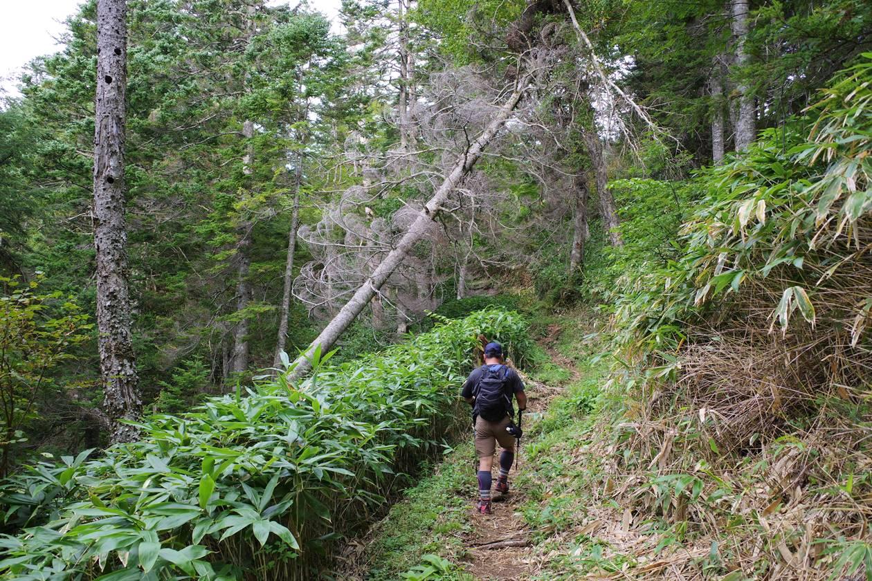乗鞍岳・三本滝コース登山道