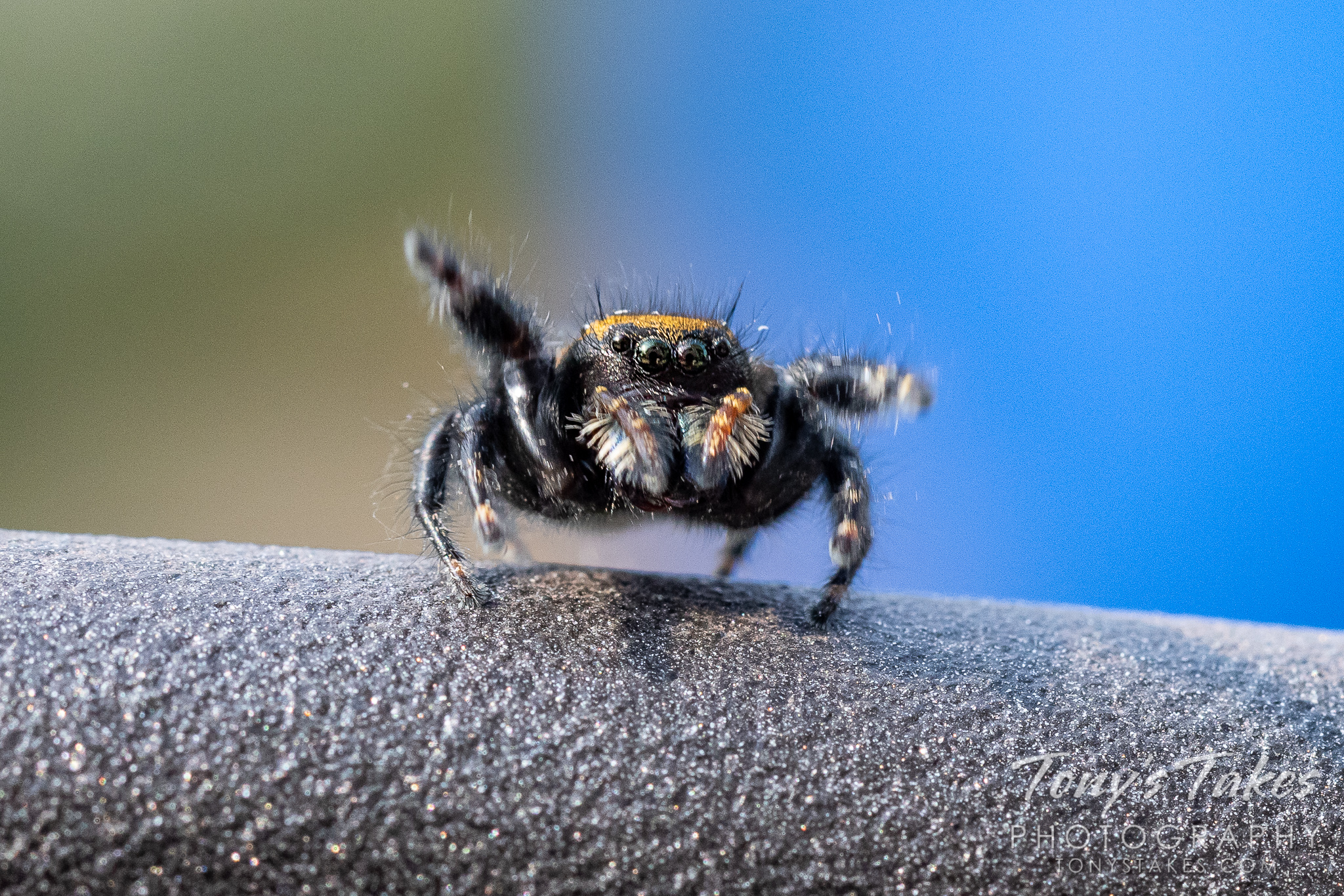 Friday funny: Spider sends photographer onto his butt