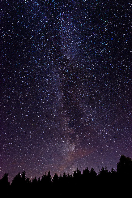 Pine Forest Milky Way