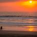 Durban Spring Walks 2020-11
