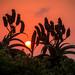 Durban Spring Walks 2020-41