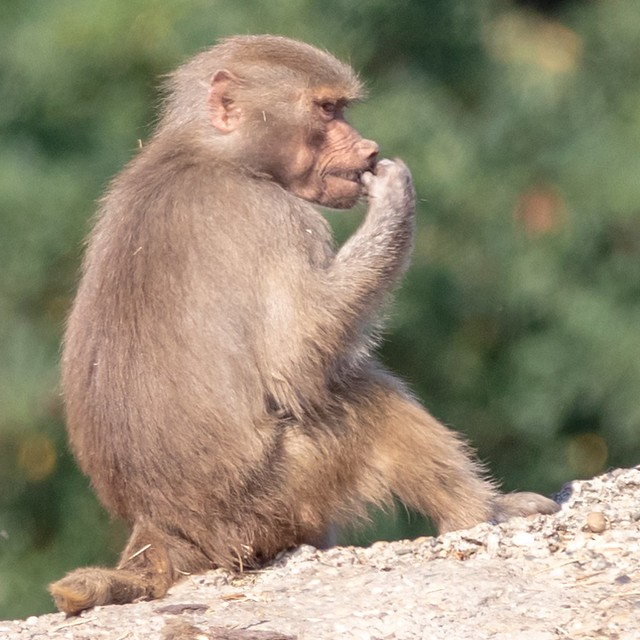 Does anyone have a toothpick for this monkey?