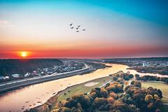 Birds | Kaunas aerial #267/365