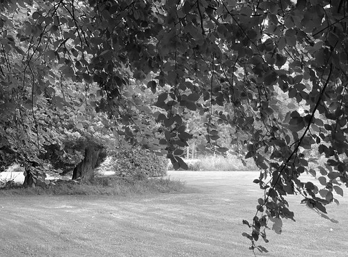 elisafox22 apple iphone xsmax landscape driveby hmt monochromethursday trees leaves infullleaf sunshine shade shadows monochromebokehthursday monochrome light bw blackandwhite summer leithhall outdoors kennethmont aberdeenshire scotland elisaliddell©2020