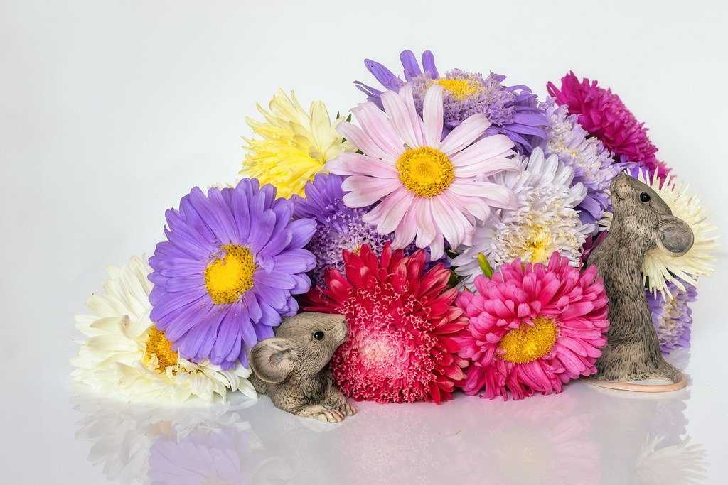 Of Flowers and Mice