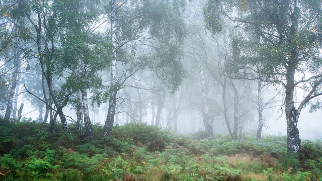 Woodland Mist 2