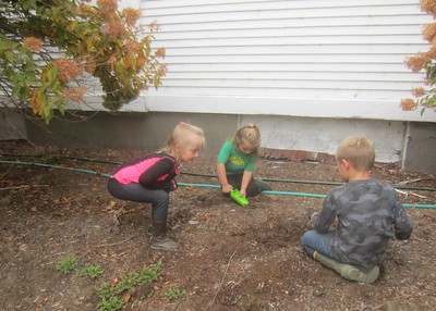 planting apple seeds