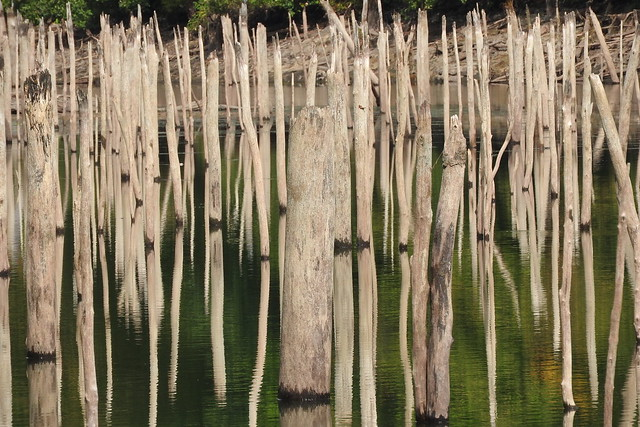 Drowned Dead Forest