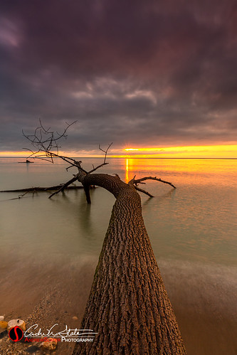 cudahy greatlakes lakemichigan mke milwaukee morning nature outdoors sheridan sunrise tree water wisconsin unitedstates mkemycity milwaukeecountyparks canon 5dmarkiii branches fallen clouds