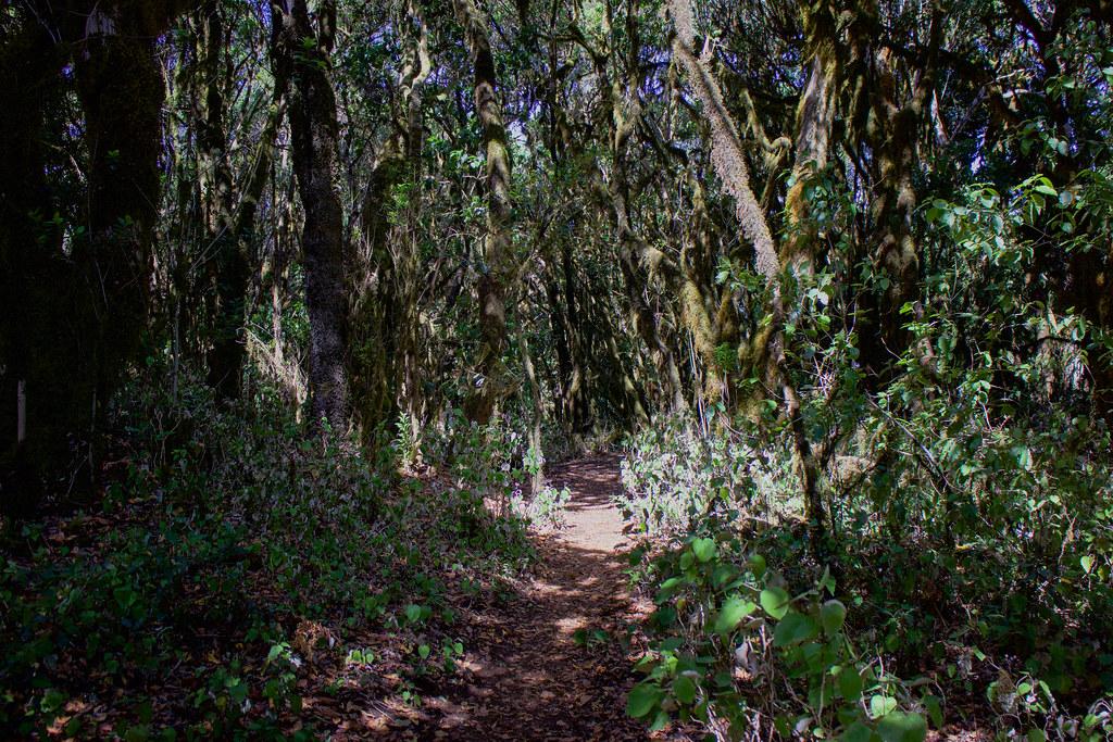 Sendero circular Raso de Brumas en La Gomera