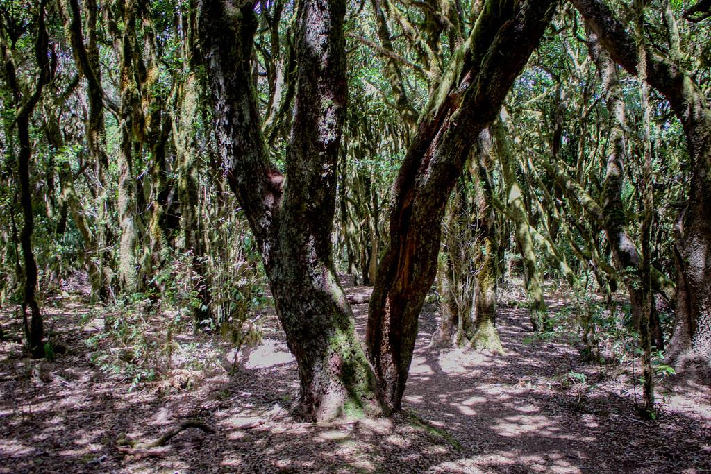 Parte del sendero de Raso de Brumas en La Gomera