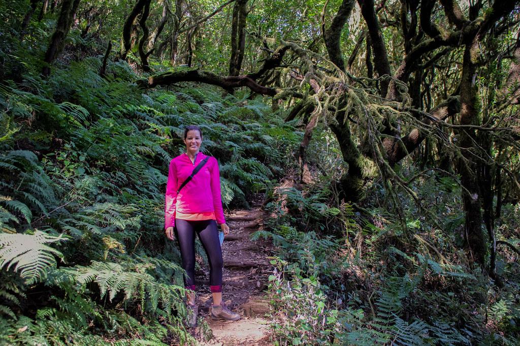 Helechos dentro del parque nacional de Garajonay