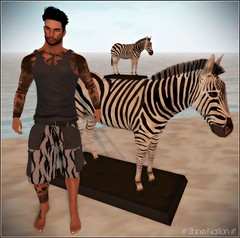 ** Zebra Statue & Grey Tiger Shorts **