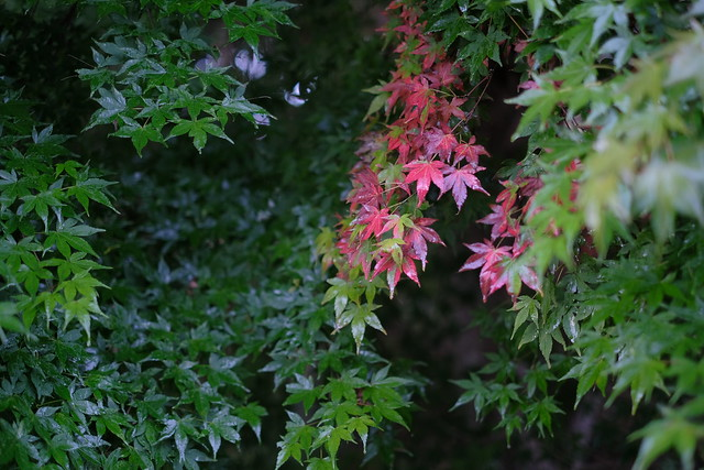 Autumn is coming / Karuizawa, Nagano, Japan.