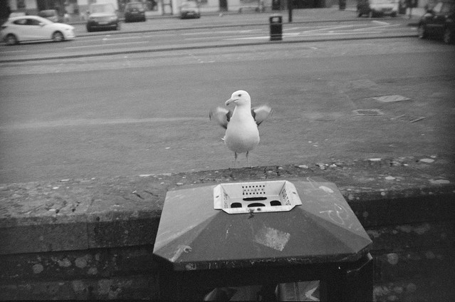 Gull Glare - Tamashi FMD QP8000 with expired BW400CN