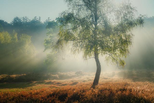 Morning dew in Beisbroek wood
