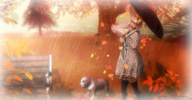 Autumn's Rain.. 💛