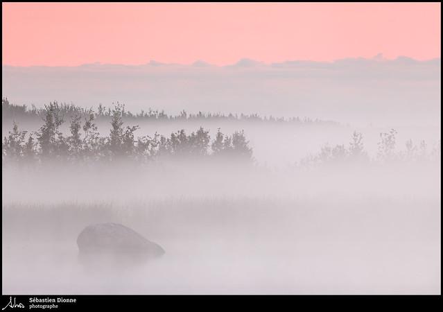 Le marais sous la brume