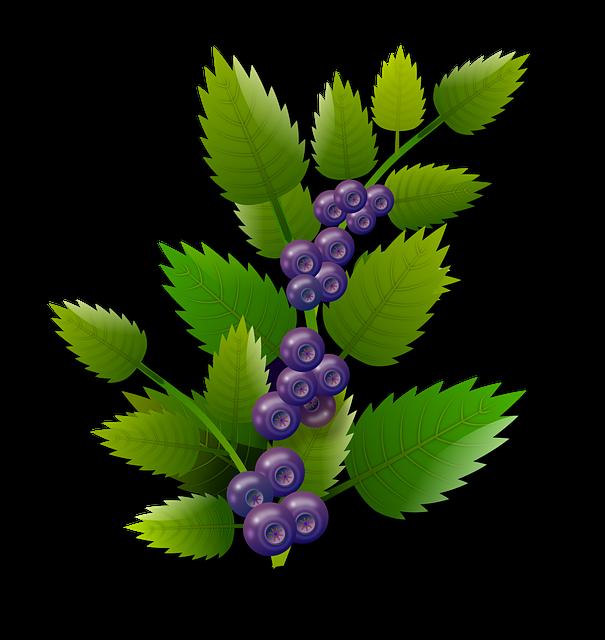 gambar flora buah berwarna