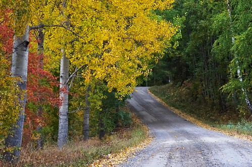 Autumn road | by Stefano Rugolo