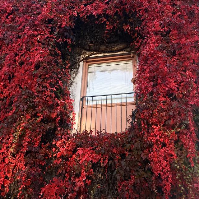 Autumn Window🍁