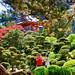"<p><a href=""https://www.flickr.com/people/158652122@N02/"">M McBey</a> posted a photo:</p>  <p><a href=""https://www.flickr.com/photos/158652122@N02/50381664027/"" title=""Japanese Tea Garden, San Francisco""><img src=""https://live.staticflickr.com/65535/50381664027_20db241a8b_m.jpg"" width=""240"" height=""159"" alt=""Japanese Tea Garden, San Francisco"" /></a></p>  <p>Part of Golden gate park.</p>"