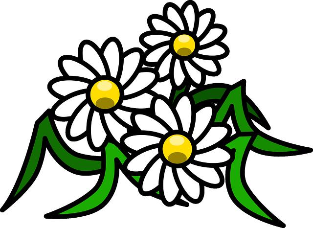 gambar bunga warna warni indah