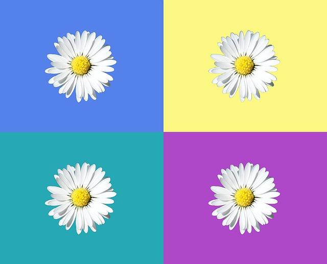 gambar bunga putih