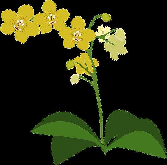 gambar anggrek flora