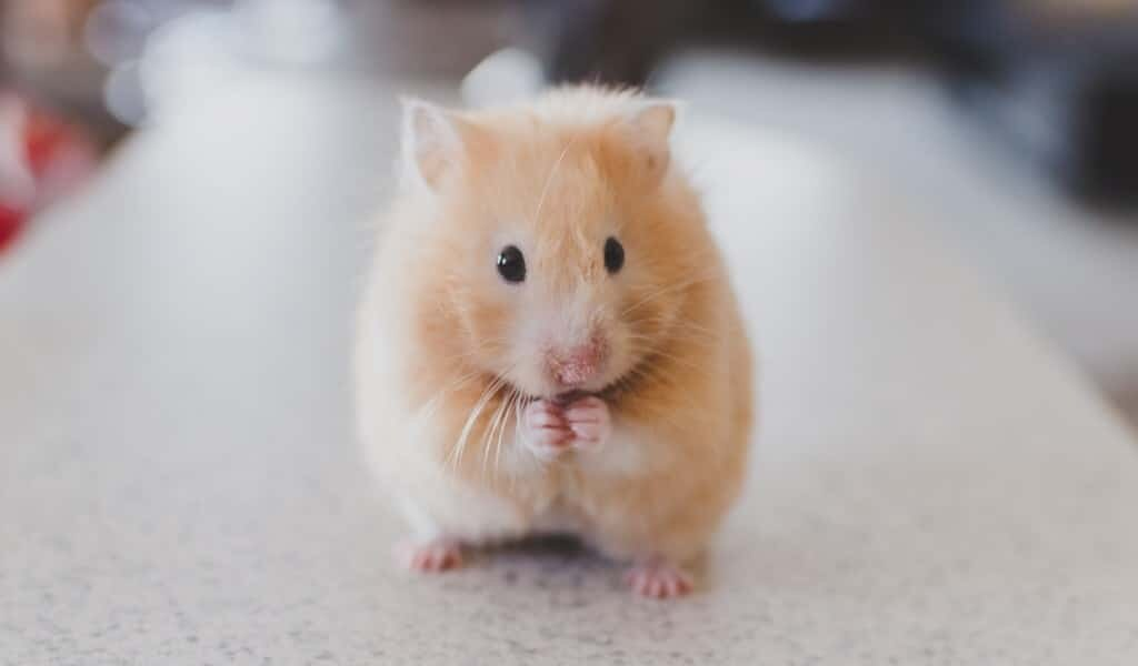 Parkinson : les cellules souches réparent le cerveau des souris
