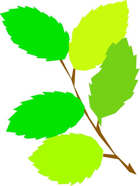 gambar flora daun