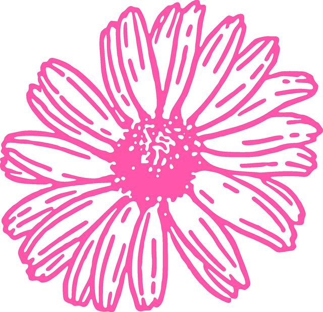 gambar flora daisy
