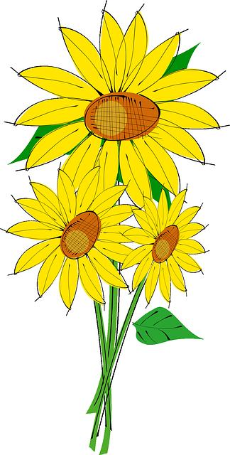 gambar flora bunga matahari kuning hijau