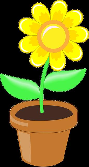 gambar bunga matahari berwarna dalam pot