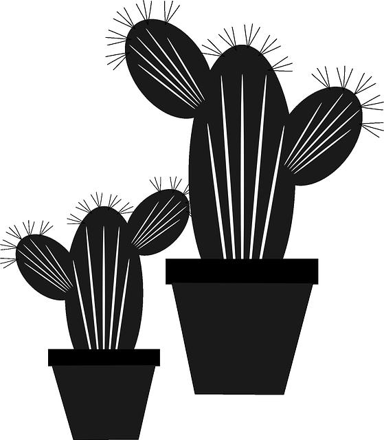 Gambar kaktus untuk anak SD