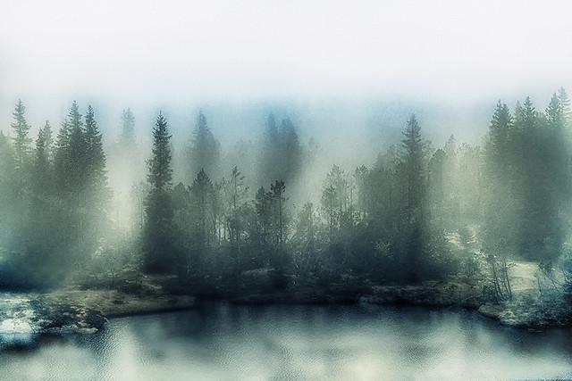 Bergen Mist